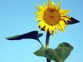 Solar flower — Stock Photo