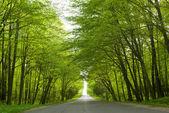 Road. — Stock Photo