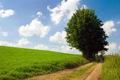 Vista da zona rural. — Fotografia Stock