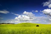 Summer landscape. — Stock Photo