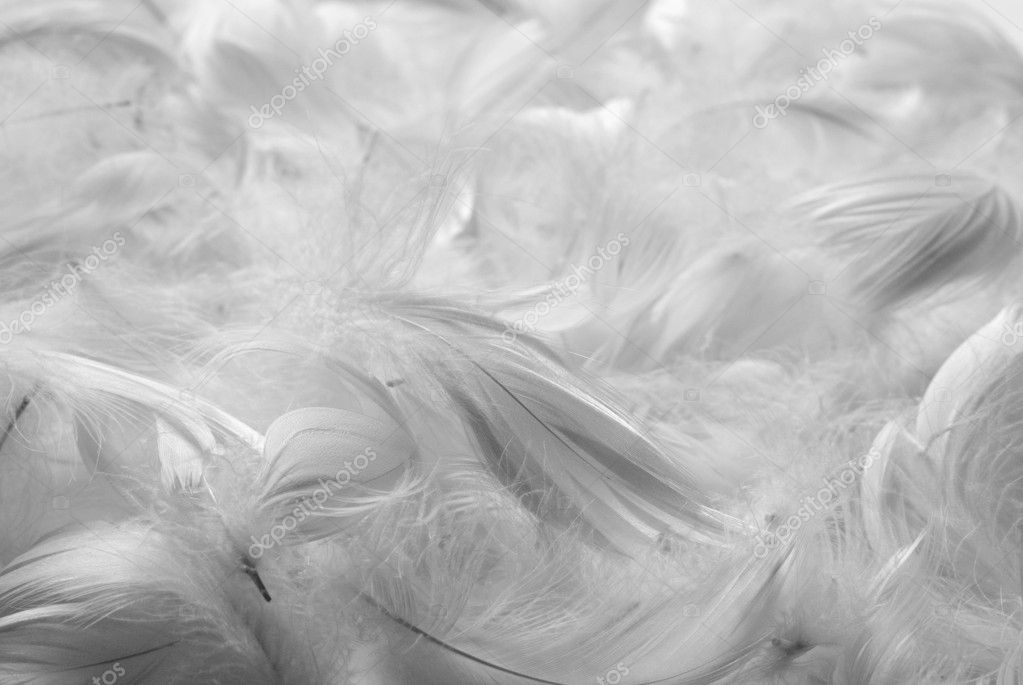 Feathers background. Black and white. Shallow depth of field. — Stock Photo #2727408