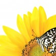 Butterfly on a yellow sunflower — Stock Photo