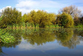 Lake reflection — Stock Photo