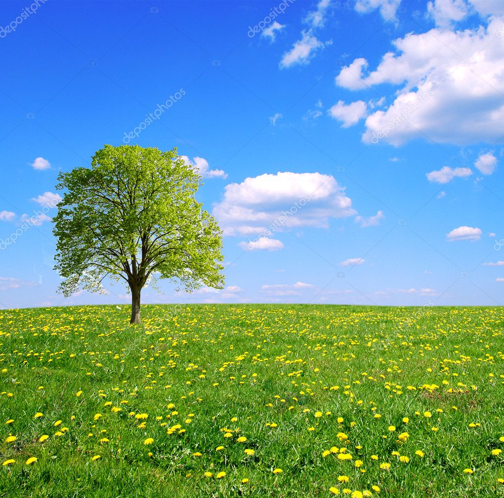 Spring field,lone tree and blue sky. — Stock Photo #2809381