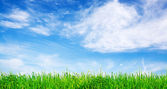 Green gras and vibrant sky — Stock Photo