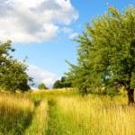 Wild Nature - Landscape — Stock Photo