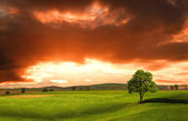 Sunset over farm field with lone tree — Stock Photo
