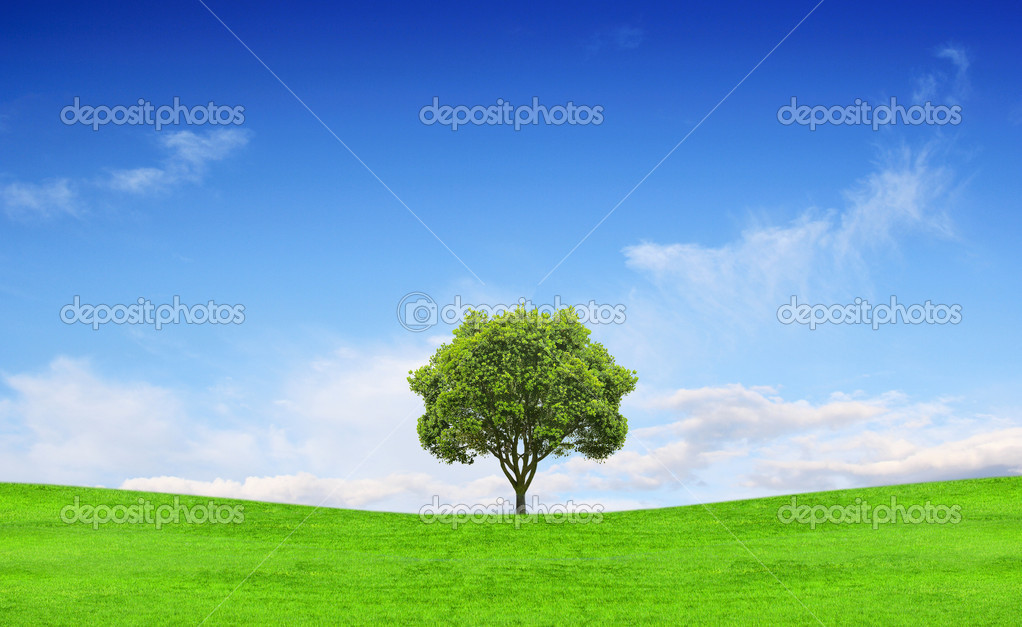 Field, tree and blue sky — Stock Photo #2833230