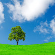 Lonely tree on green field — Stock Photo #2841892