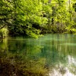 Green Lake - Nature Reserve - Stock Photo