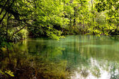 Grüner see - naturschutzgebiet — Stockfoto