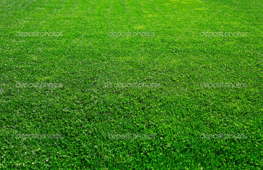 Green Grass Background Images Green Grass Background — Photo