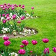 Tulips in garden — Stock Photo #3051666