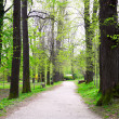 A green path in a spring forest — Stock Photo #3060258