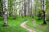 Green nature. pathway in the forest — Stock Photo