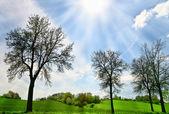 Lindo dia de primavera — Foto Stock