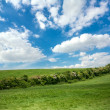 Idyllic summer landscape — Stock Photo