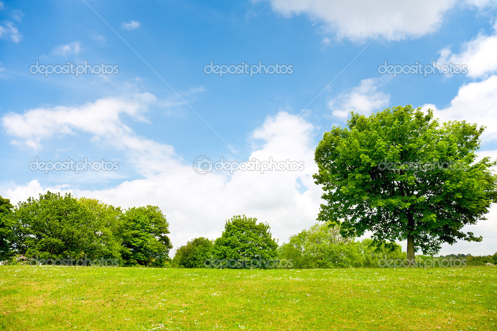 Green grass,trees and cloudy sky — Stock Photo © majaFOTO ...