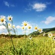 Sunny summer landscape — Stock Photo