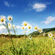 Sunny summer landscape — Stock Photo #3579251