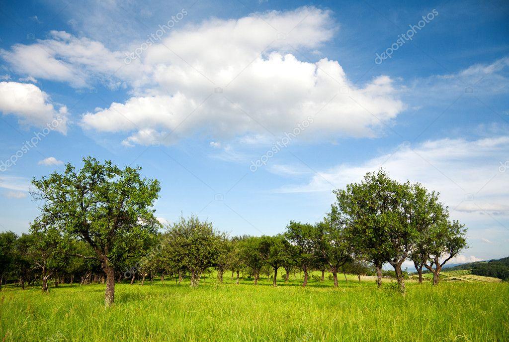 绿色夏天风景– 图库图片