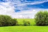 Eco - bel paesaggio verde — Foto Stock