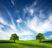 字段、 树和阴暗的天空 — 图库照片