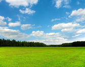 Beautiful green field and blue sky — Stock Photo