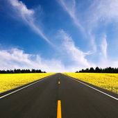 Straight road — Stock Photo