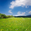 Stock Photo: Green grassland