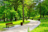 Beautiful park — Stock Photo