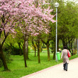 Stock Photo: Spring alley