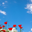 Bright red poppies on blue sky - Stock Photo