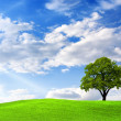 Stock Photo: Green landscape