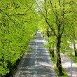 Stock Photo: Spring road