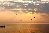 Flying seagulls on golden sunset — Stock Photo