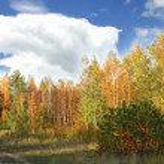 Beautiful colorful autumn landscape — Stock Photo
