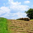 Time of mowing — Stockfoto