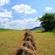 Wheat field — Stock Photo #2827765