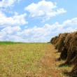 Field of wheat — Stock Photo #2827770