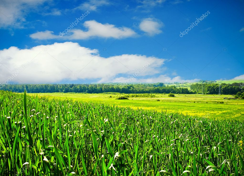 Spring landscape  Stock Photo #2844061