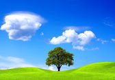 Oak tree on green field — Stock Photo