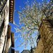 Blossoming tree - Foto de Stock  