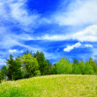 Beautiful spring landscape — Stock Photo