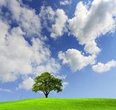 Oak tree in a field — Stock Photo