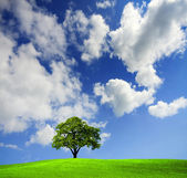 Green tree in a field — Stock Photo