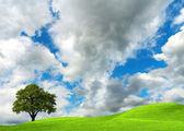 Oak tree on cloudy sky — Stock Photo