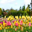 Stock Photo: Colorful flowerbeds with tulips