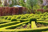 Verde parque soleado — Foto de Stock