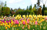 Colorful flowerbeds with tulips — Stock Photo